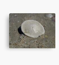 Sand Dollar - Cable Beach Canvas Print