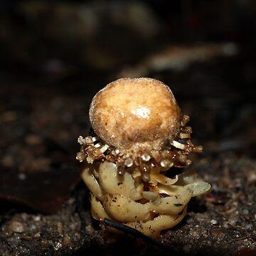 Mossman Gorge Mushroom by CassarrArt