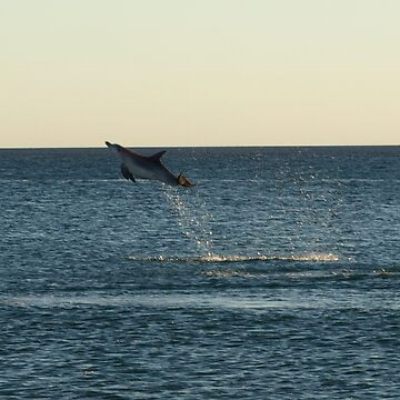 I can fly!!! Dolphin Jump by CassarrArt