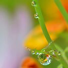 Garden Waterdrops 3 by relayer51