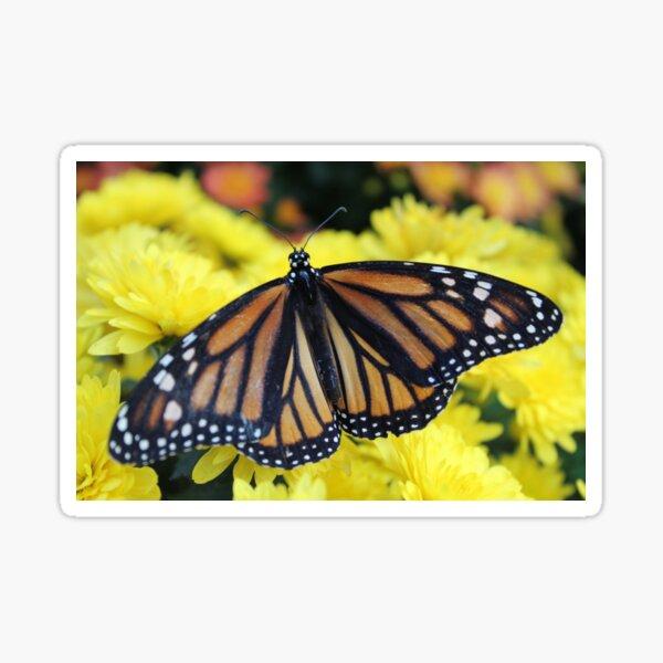 Monarch Butterfly on Flowers Sticker