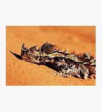 """Let Snoozing Dragons Lie"" Thorny Devil, Western Australia Photographic Print"