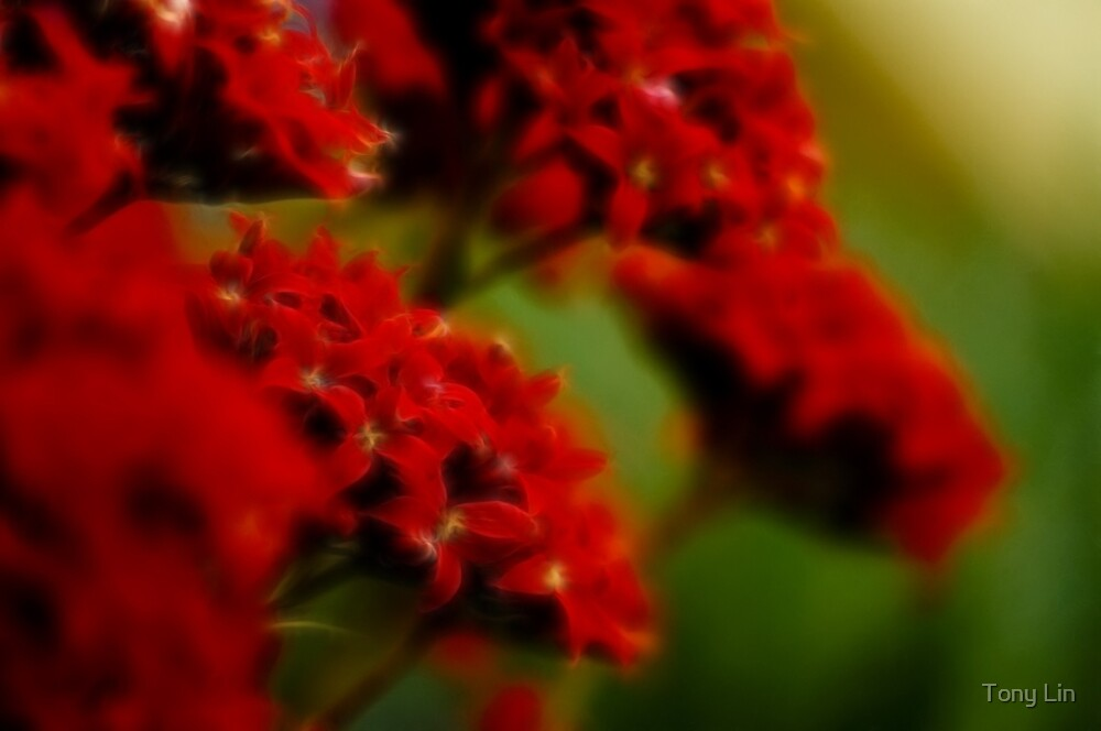 Explosion of Red by Tony Lin