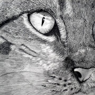 cats eye by atouchofcanvas