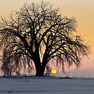 Cottonwood Cold Sunrise by Gregory J Summers