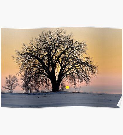 Cottonwood Cold Sunrise Poster