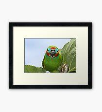 Cyclops bird (native to Australia) Framed Print