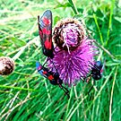 Blue and Red bugs on a pink flower by Shulie1