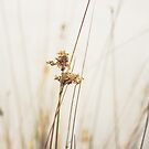 Bulrush by Karen E Camilleri