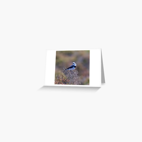 CHAT ~ White-fronted Chat by David Irwin Greeting Card