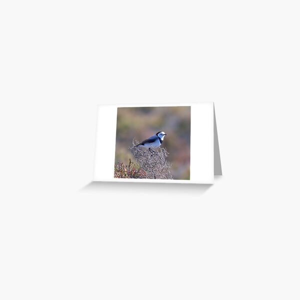 CHAT ~ White-fronted Chat XdhTR6Xq by David Irwin Greeting Card