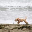 Beach! by Lynn Starner