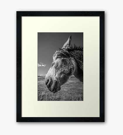A Hint of a Smile Framed Print