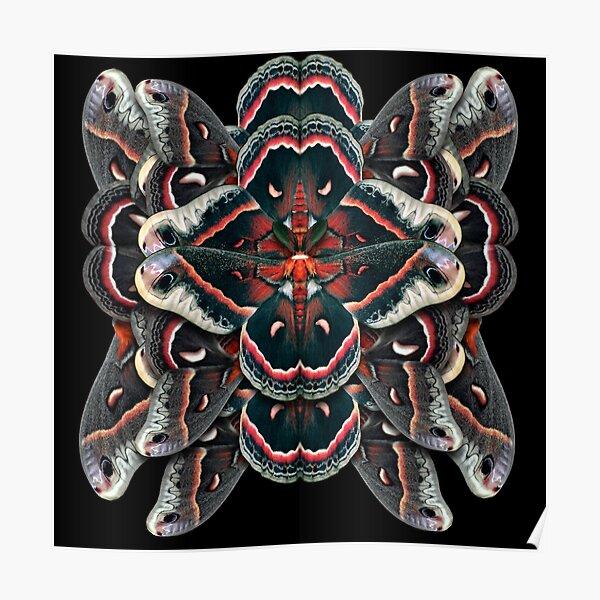 Cecropia Moth Mandala - Symmetrical Poster