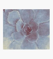 Watercolor Succulent Photographic Print