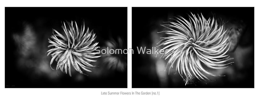 Late Summer Flowers In The Garden [no.1] by Solomon Walker