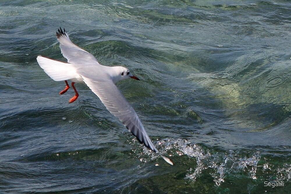 Seagull in Flight by Segalili