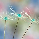 Rainbow Drops by Barb Leopold