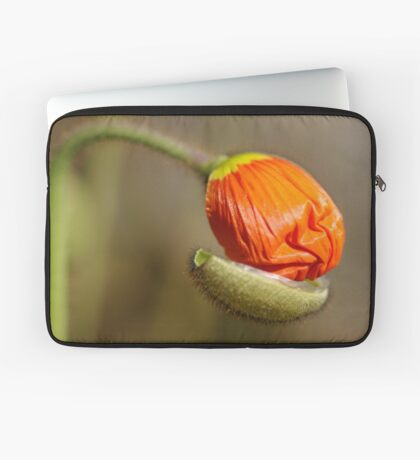 Poppies take off their coats in the sun Laptop Sleeve