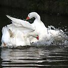Goose fight by turniptowers