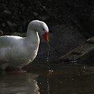 Goose wash by turniptowers