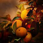 Apples in Fall - A Living Still Life by Theresa Campbell