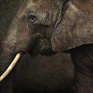 elephant by lucyliu
