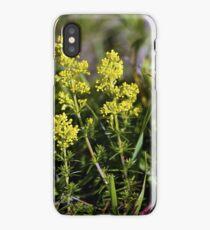 Galium Verum (Lady's Bedstraw), Inishmore, Aran Islands iPhone Case