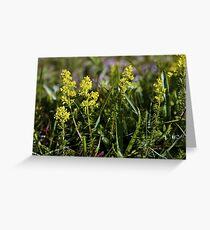 Galium Verum (Lady's Bedstraw), Inishmore, Aran Islands Greeting Card