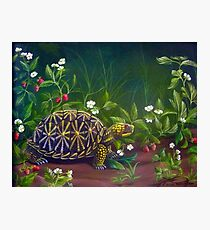 Florida Box Turtle, Strawberries and Blooms Photographic Print