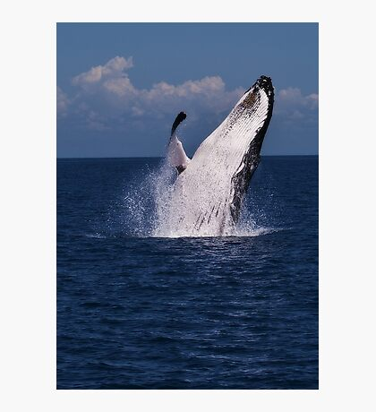 Humpack Whale -  Breaching 3 Photographic Print
