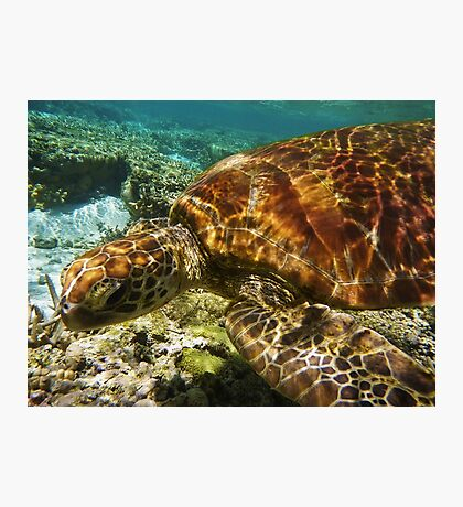Snorkeling with a Green Turtle  Photographic Print