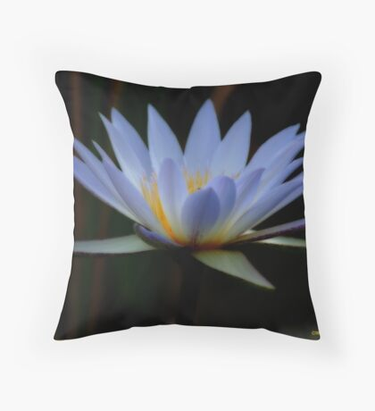 IN BLUE - THE WATERLILY - – Nymphaea nouchall Throw Pillow
