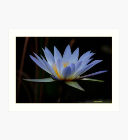 IN BLUE - THE WATERLILY - – Nymphaea nouchall Art Print