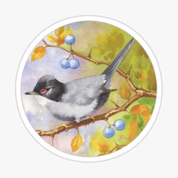 Sardinian Warbler Sticker