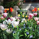 Spring tulips by Maryna Gumenyuk