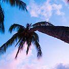Palms by Steve Hunter