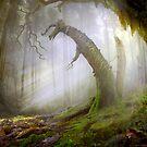 Witchy Woods by Igor Zenin