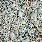 Sea Shells Becoming Sand by pjwuebker