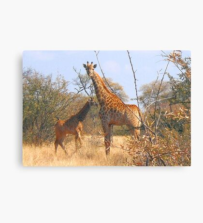 THE LATEST NEW COMMER!  The Giraffe baby ! Canvas Print