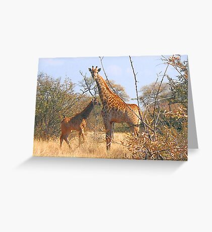 THE LATEST NEW COMMER!  The Giraffe baby ! Greeting Card