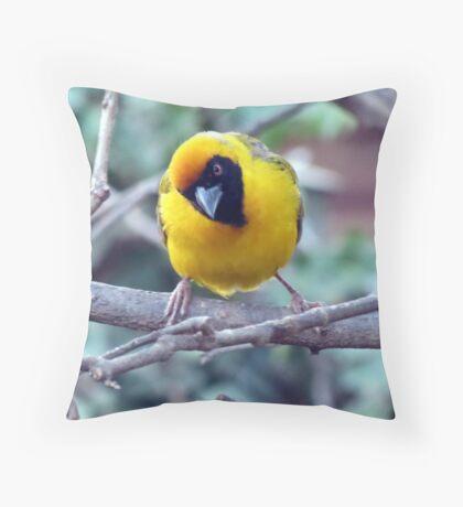 Swartkeelvink / southern masked weaver Throw Pillow