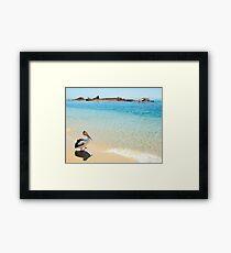 Pelican at Tangalooma Wrecks Framed Print