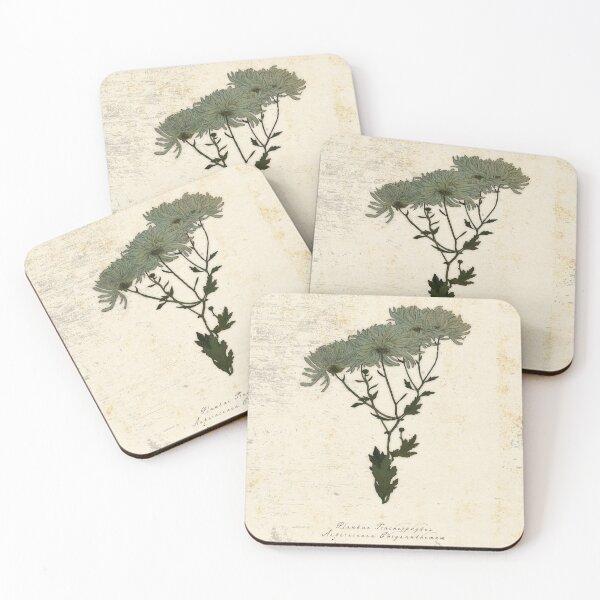 Dark Academia Vintage Chrysanthemum  Coasters (Set of 4)