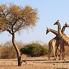 African Giraffe tri- neck-ta by Sharon Bishop