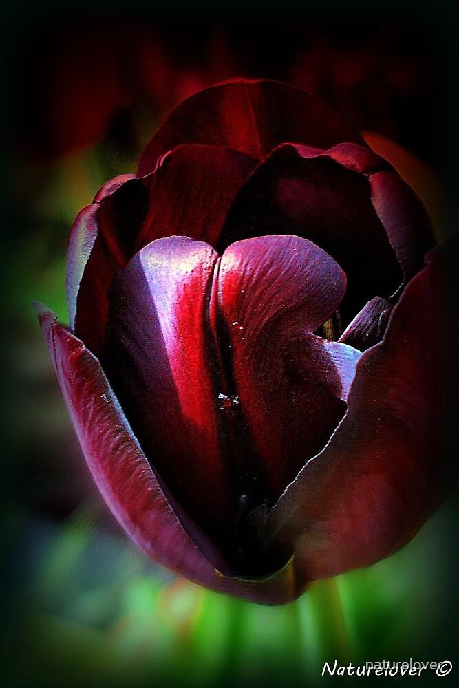Ruby Tu-Lips by naturelover