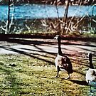 Two Geese by Maisie Woodward