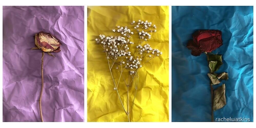 Triptych: Crumpled Flowers by Rachel Watkins