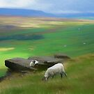 Moorland with sheep by David Tovey