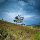 Standing Proud - a single little tree by Clare Colins
